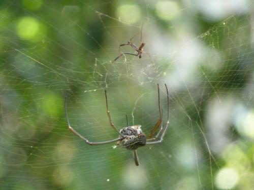Spider found some food