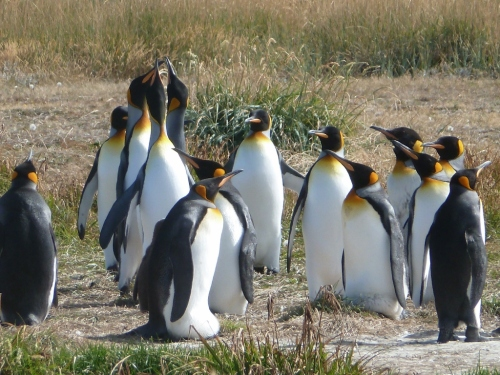 Penguin chorus choir auditions